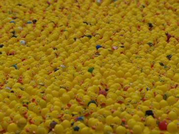 Hamburger Lions Entenrennen 2011 Ein Meer aus Enten